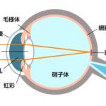 近視の2大原因を知って視力低下スパイラルから抜け出そう